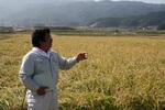 20081019寒北斗稲刈り02.jpg