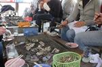 201003鍋島牡蛎04.jpg