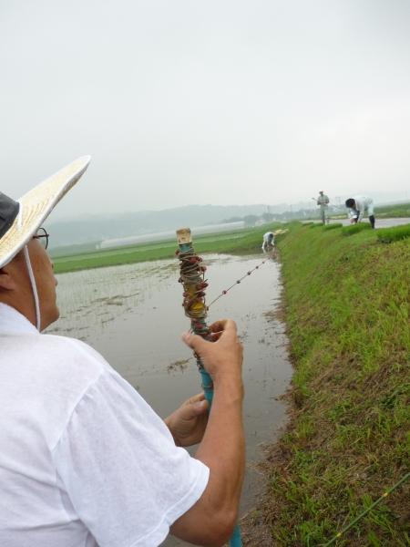 玉の井酒造田植え20080608.jpg