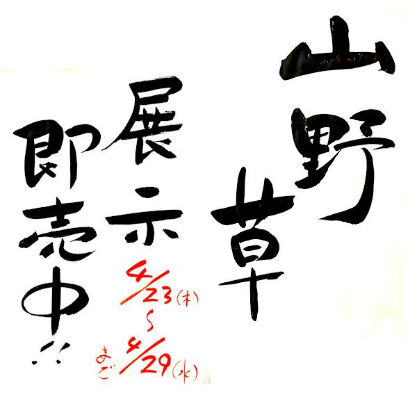 山野草20090401.jpg