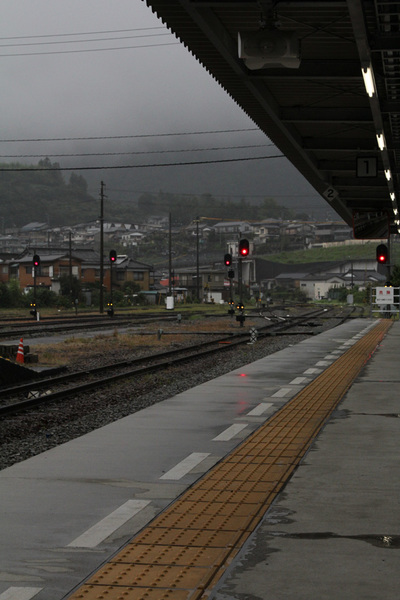 三芳菊20110905.JPG