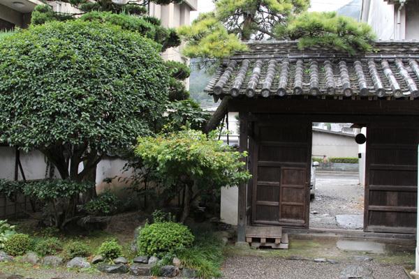 三芳菊20110908.JPG