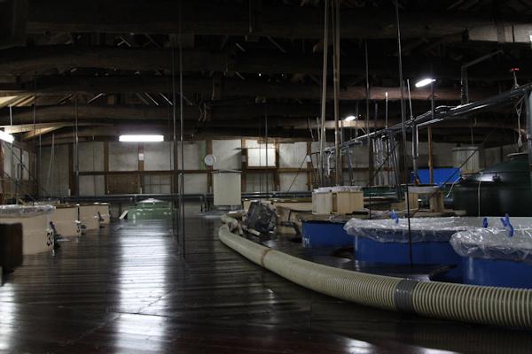 玉の井20110221.JPG
